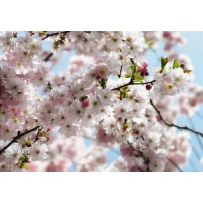 Фотообои Komar National Geographic Spring