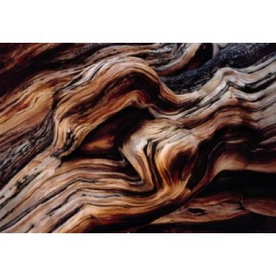 Фотообои Komar National Geographic Old Giant