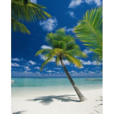 Фотообои Komar Scenics Ari Atoll