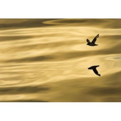 Фотообои Komar National Geographic 1-604