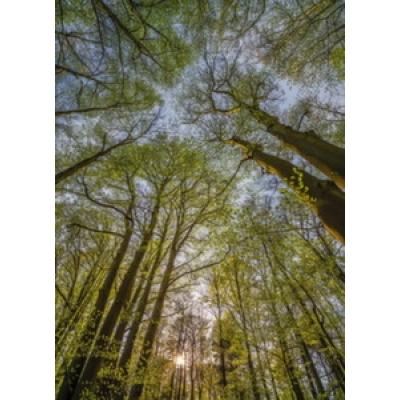 Фотообои Komar National Geographic Canopy