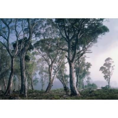 Фотообои Komar National Geographic Fantasy Forest