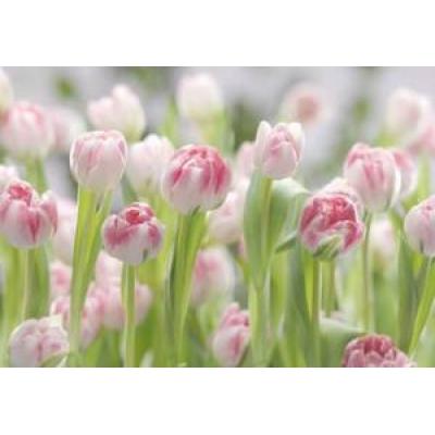 Фотообои Komar Imagine Secret Garden