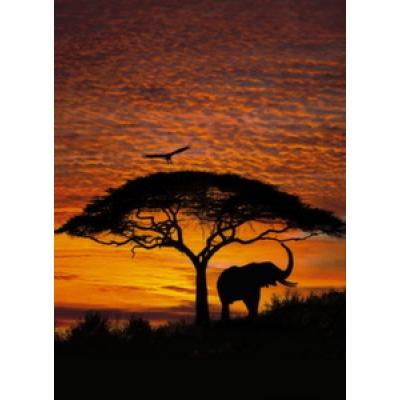 Фотообои Komar National Geographic African Sunset